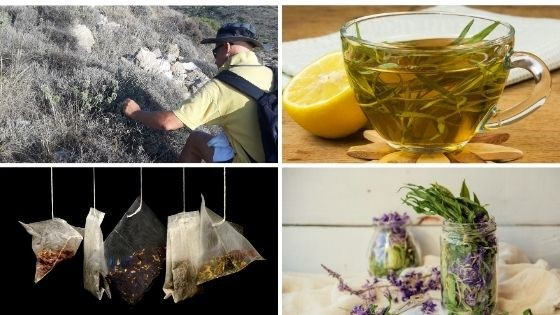 greek herbal tea